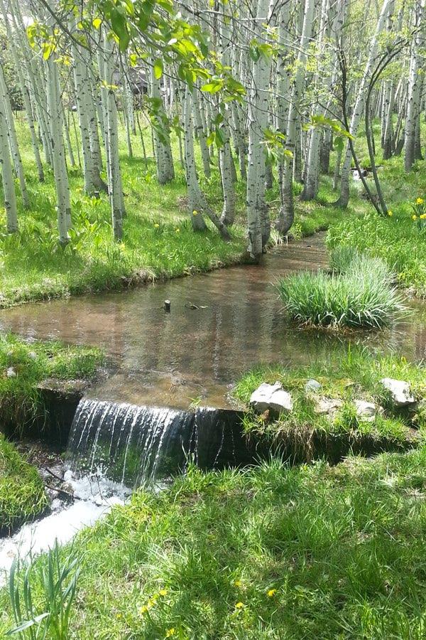 Glenwood-Cemetery-stream
